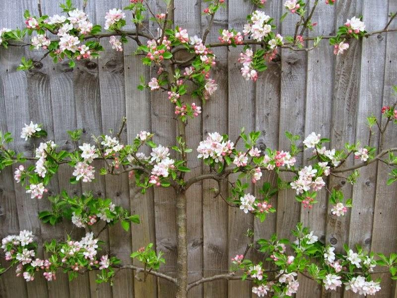 Marycot el jard n en abril 2014 for Jardines con arboles frutales