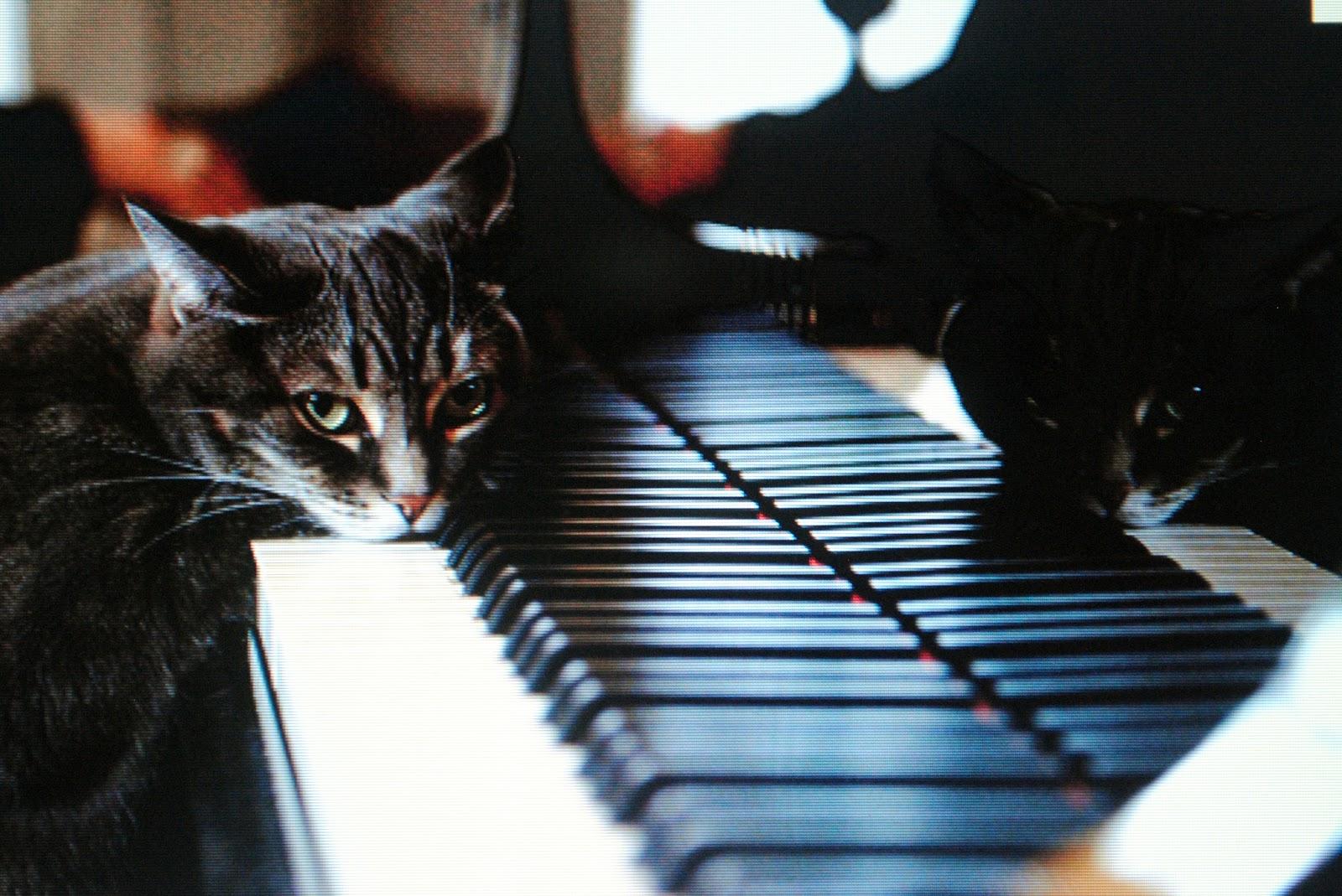 Музыка и кошки цитаты