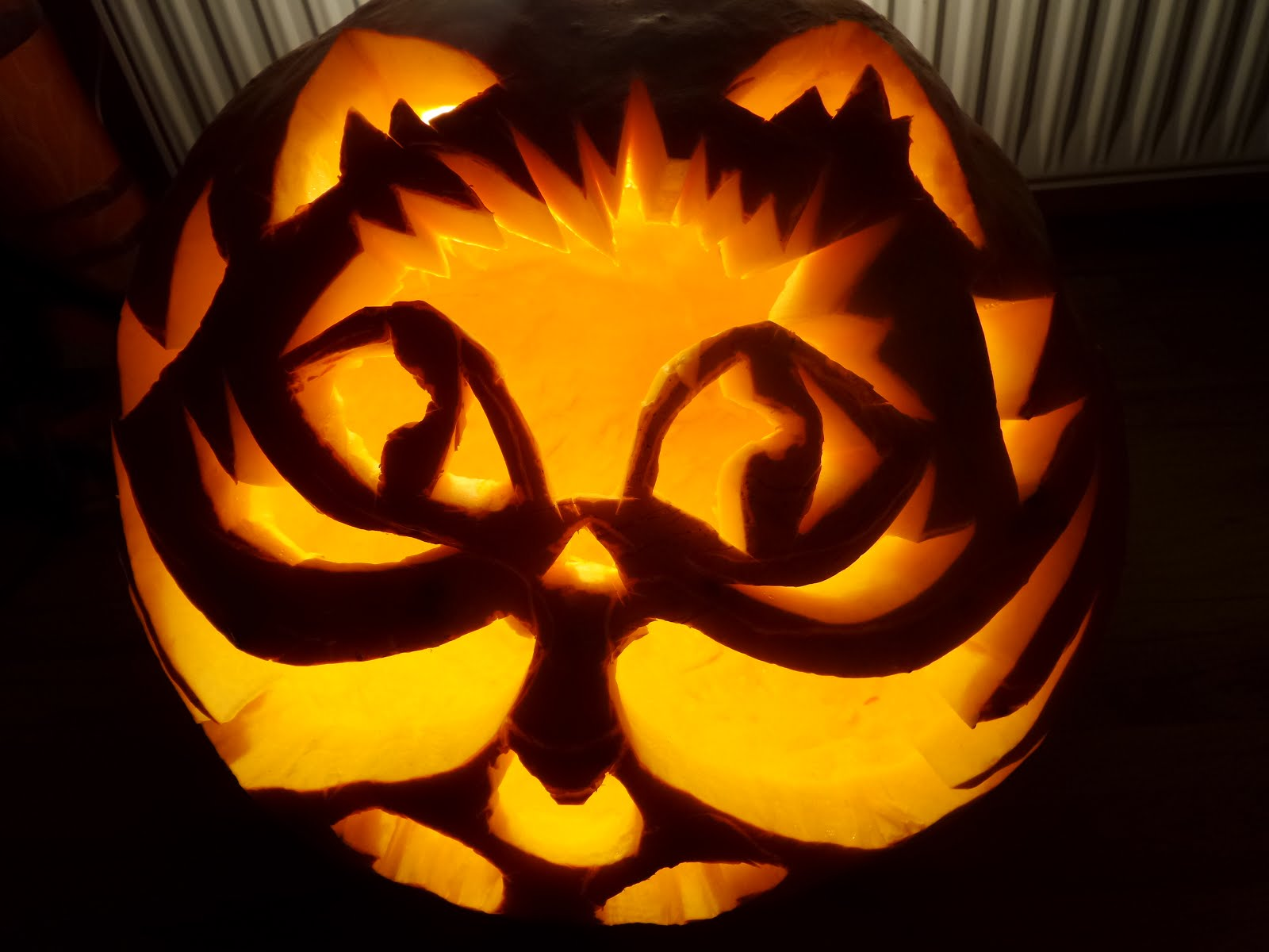 Pumpkin cat Simon