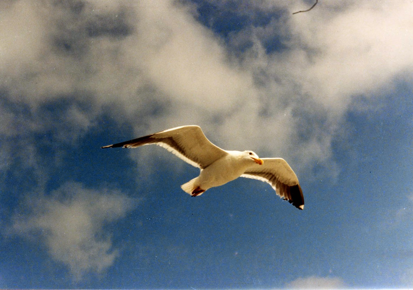 10 Books You Have To Read - Jonathan Livingston Seagull, by Richard Bach