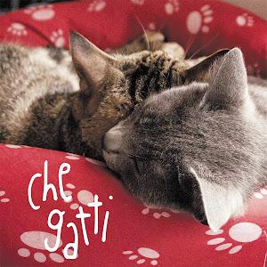 Che gatti, il mio libro
