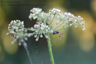 macro araignée sur une fleur photo graphique