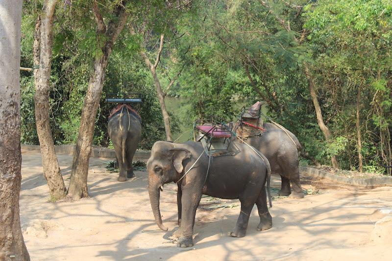 k swiss shoes thailand elephants bangkok thai