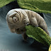 Tardigrade - The most resistant animal in Earth lives among mosses
