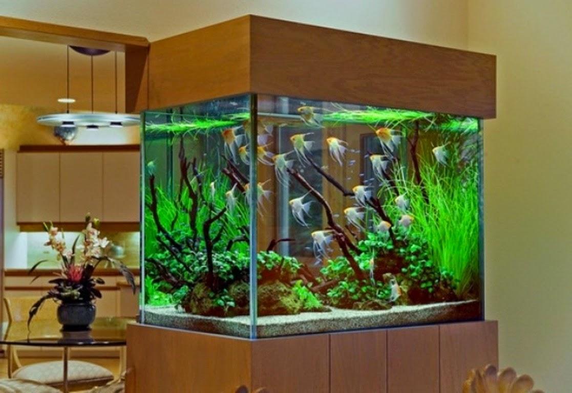 Ornamental fish keeping - Awesome fish tank decorations ...