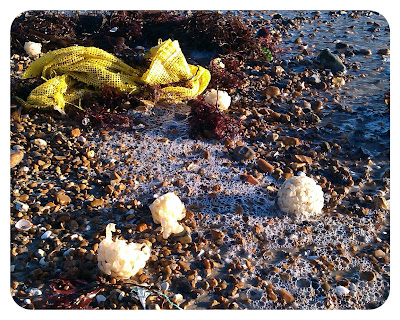 Sea sponges washed ashore