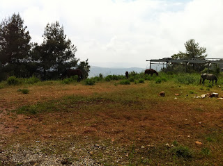 Galil farm for sale