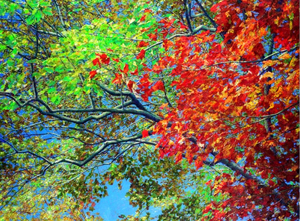 paisajes-naturales-con-arboles
