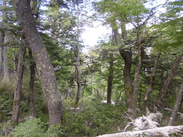 Bosque Villa la Angostura