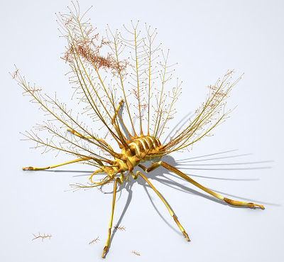 Hallucinochrysa