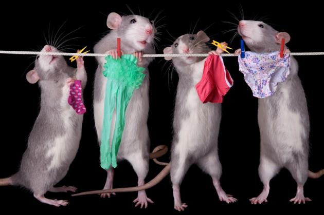 http://4.bp.blogspot.com/-B_q99cmgLzQ/T58txsDDUrI/AAAAAAAANs4/muqXr5PlptU/s1600/rats+underwear