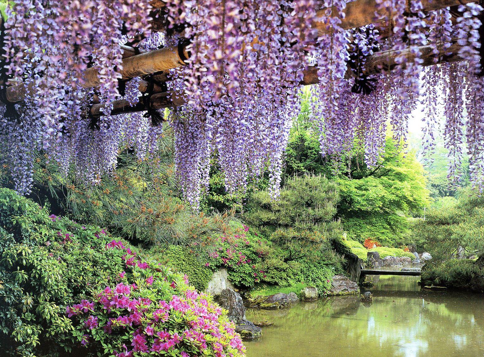 Travel Trip Journey Kawachi Fuji Gardens Japan