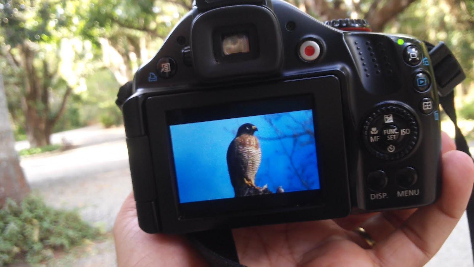 AUTORIZAÇÃO de uso de filmagens, gravações e fotografias no PELG