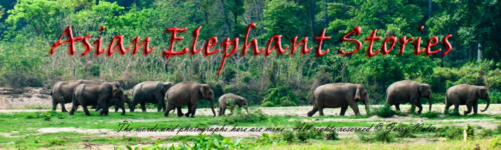 Asian Elephant Stories