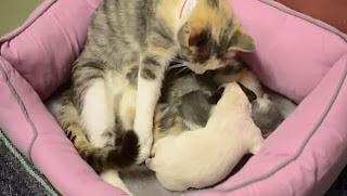 Kucing Mengadopsi Anak Anjing