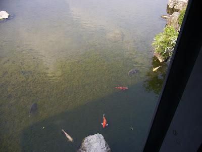 万博記念公園・日本庭園 錦鯉