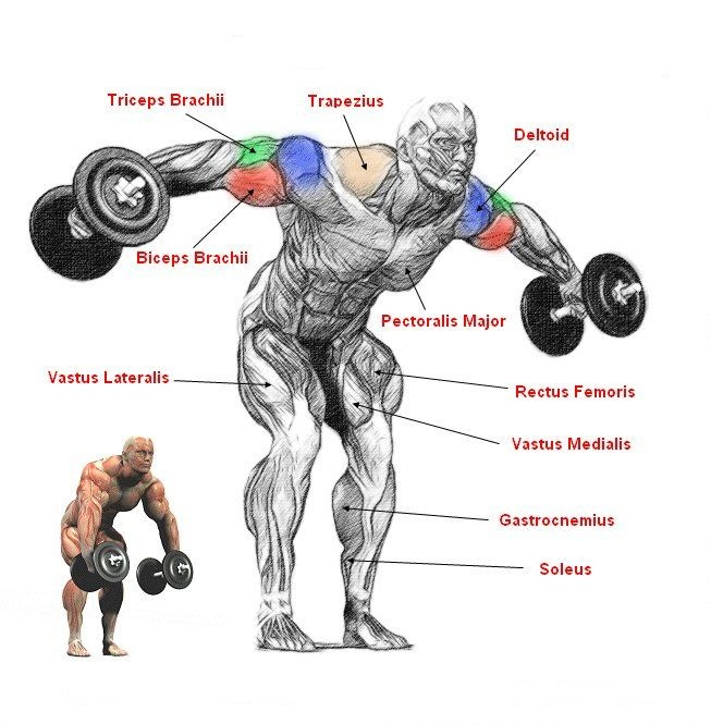 Rear Shoulder Raises