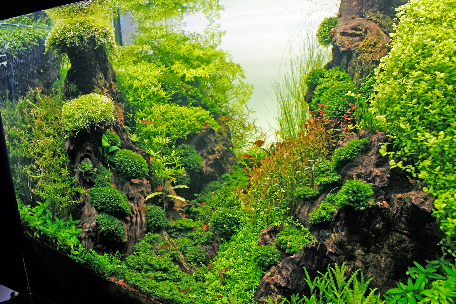 Aquascaping spain fangorn by alvaro atencia - Aquascape espana ...