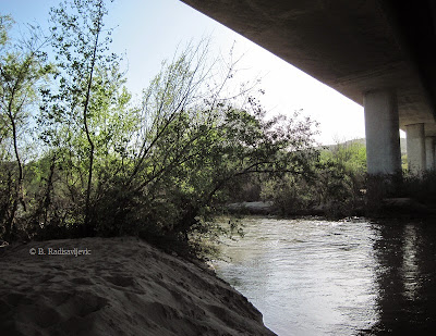 Salinas River From Under the Veterans' Memorial Bridge, © B. Radisavljevic