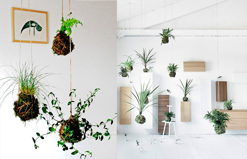 Kokedama: a arte milenar oriental, parente do bonsai