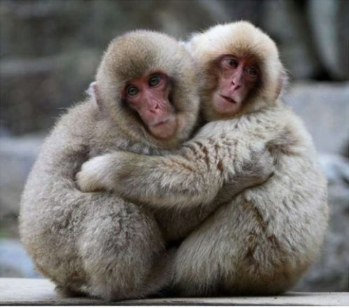 Animals need hugs too. Here are 21 pictures of animals hugging, animals hugging, cute animal hug, adorable animal pictures