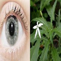 Cara Menyembuhkan Mengobati Mata Katarak Alami Tradisional Herbal Dengan Melati