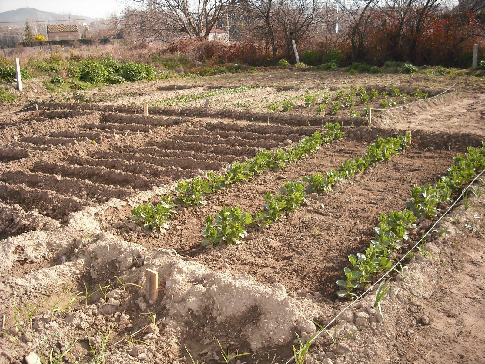Sapame en breve podremos cultivar un huerto - Como cultivar un huerto ...
