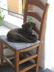 A Puppy's Preferred Perch
