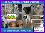 AGUIPROAN (MARITA ANIMALES EN ADOPCIN)