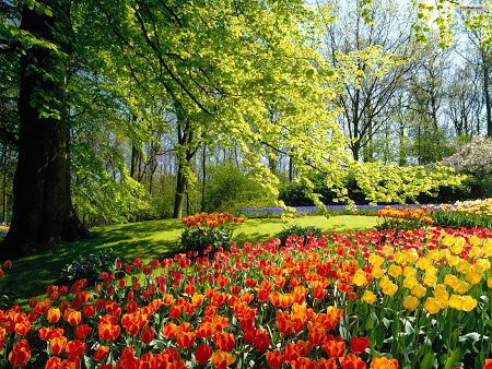 blog bunga galery foto taman bunga yang indah
