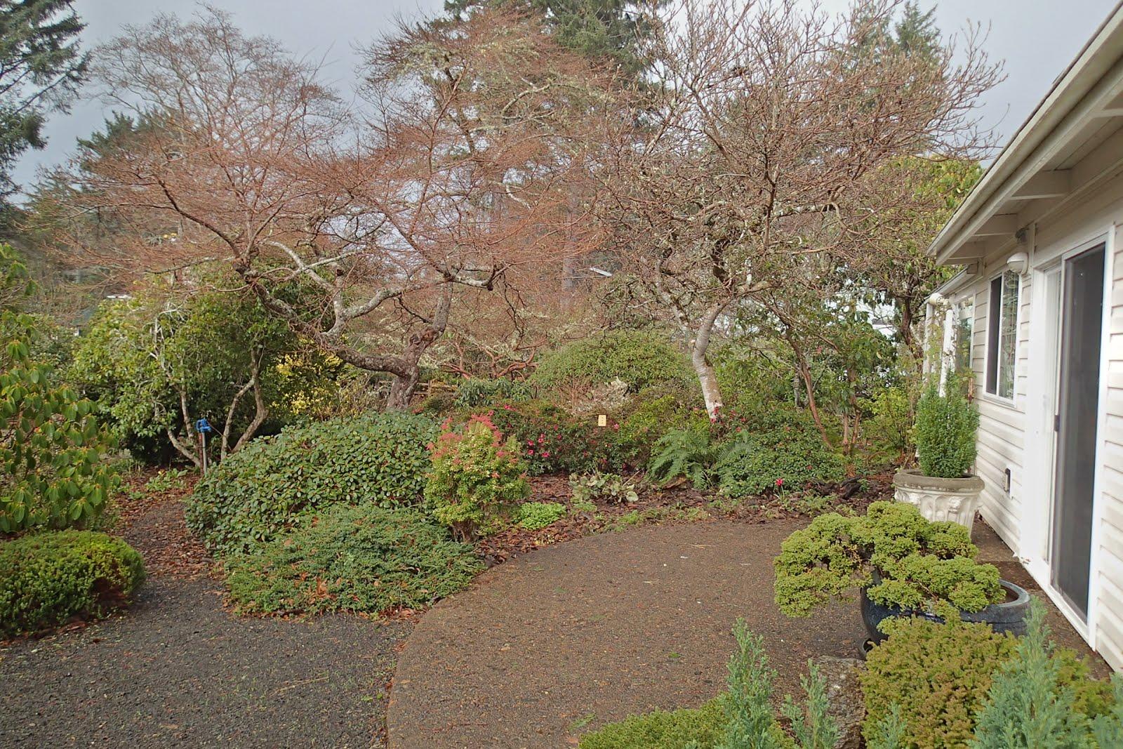 Casing Oregon: Winter in the Connie Hansen Garden