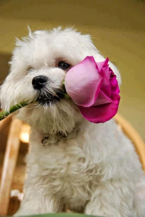 Animal Animal Animal: Cute dogs - pictures and photos
