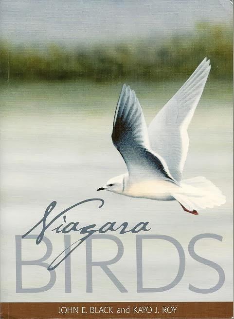 Niagara Birds