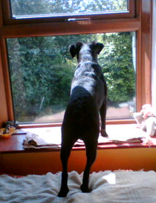 How To Stop Dog Barking When Left Outside