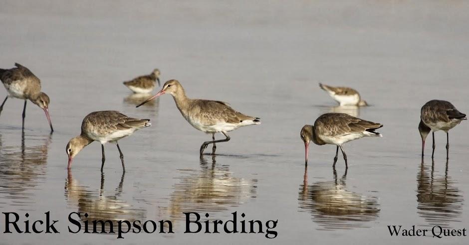 Rick Simpson Birding