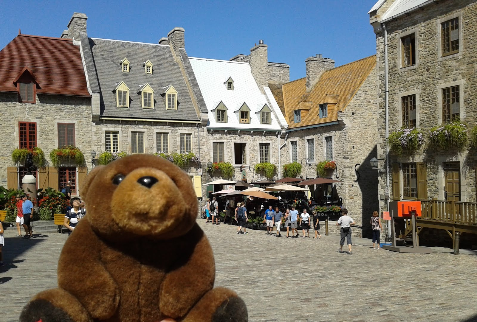 Teddy Bear in Quebec