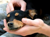 Inilah Tips Mudah Menolong Anjing yang Keracunan
