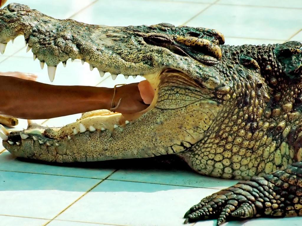 "<img src=""http://4.bp.blogspot.com/-Bdjn8CaRoGI/UtkH6Ii9-HI/AAAAAAAAIZc/uviSP1wssOk/s1600/animal-wallpapers-reptiles-crazy.jpeg"" alt=""reptiles wallpapers"" />"