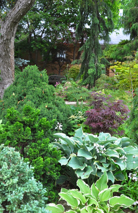 Three dogs in a garden garden canadensis part 2 for Planting schemes for small gardens