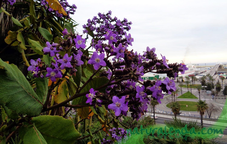 flores en el puerto