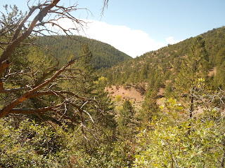 chamisa trail in santa fe national forest