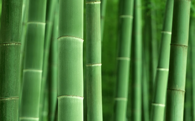 Bamboo Pictures1