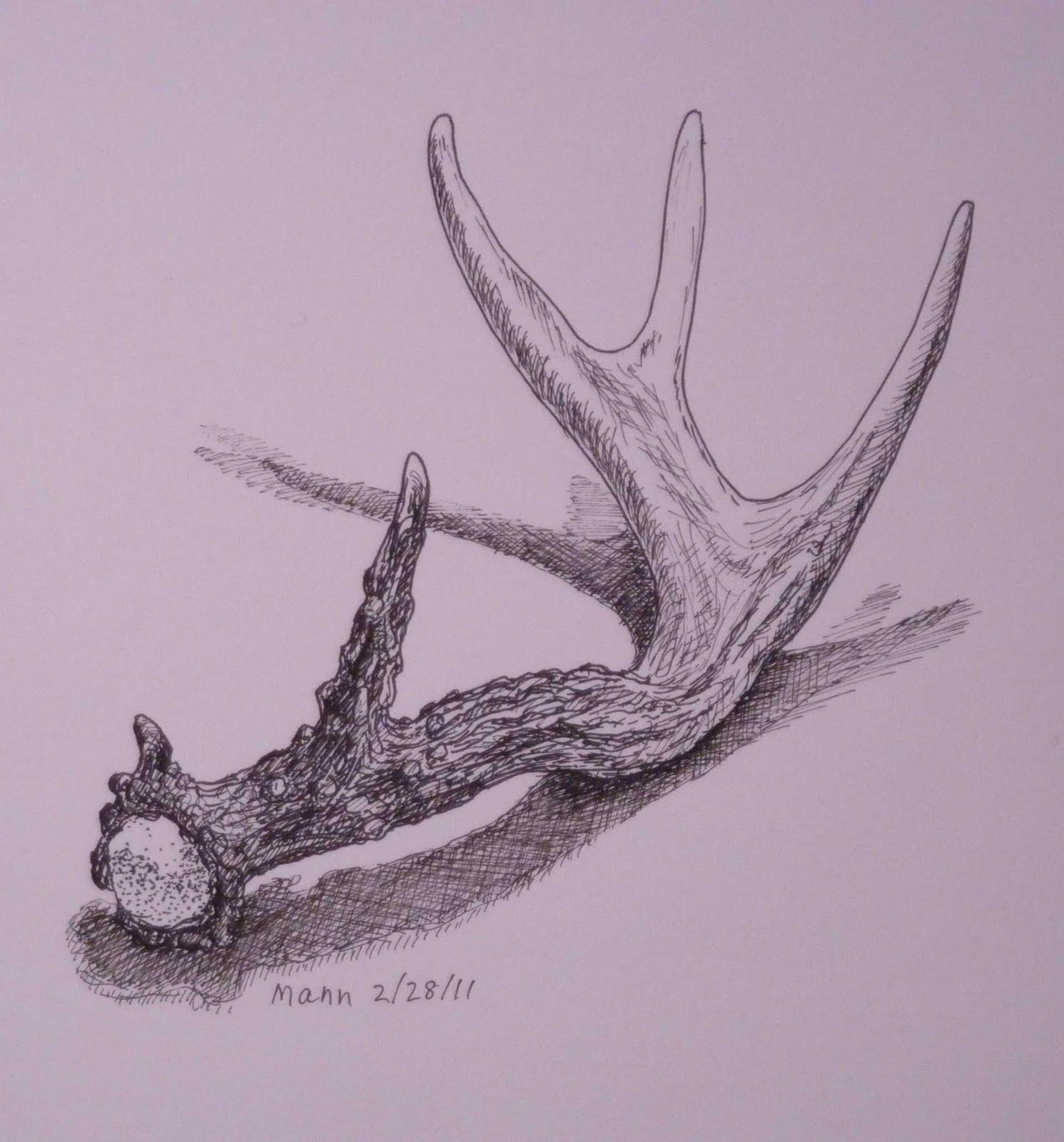 Deer Antler Drawings