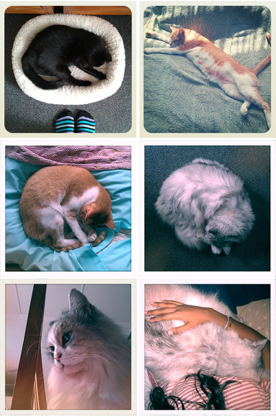 My three beloved cats