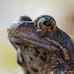 Die ersten Amphibien sind schon unterwegs