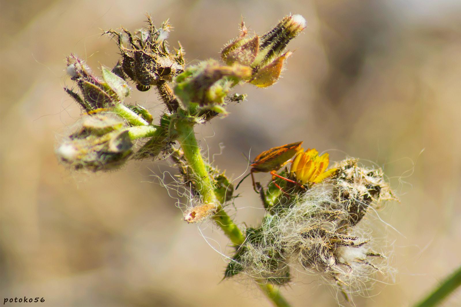 macro de planta e Insecto en Rota