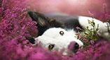 Εξαίσια πορτρέτα σκύλων