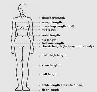 Charte:  différentes longueurs de cheveux