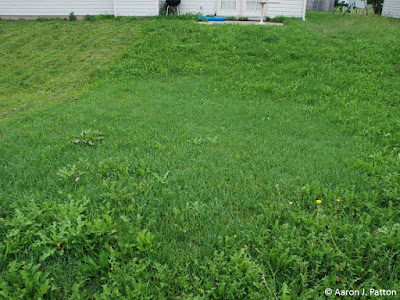 how to kill quack grass without chemicals