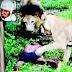 Indiano briga com a mulher e pula em cercado de leões